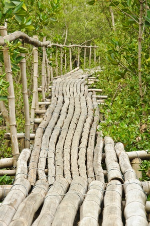 Bamboo walkway in Mangrove forest at Petchabuti, Thailand Stock Photo - 10279695
