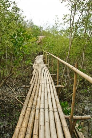 Bamboo walkway in Mangrove forest at Petchabuti, Thailand