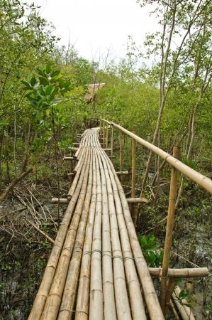 Passerelle de bambou dans la for�t de mangroves � Petchabuti (Tha�lande). Banque d'images