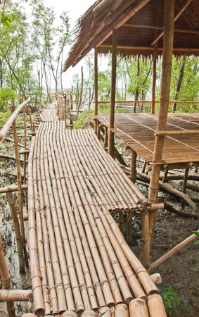 Bamboo walkway in Mangrove forest at Petchabuti, Thailand Stock Photo - 10273821