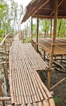 Bamboo walkway in Mangrove forest at Petchabuti, Thailand