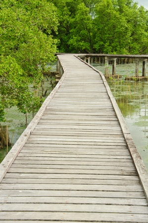 Wooden walkway in Mangrove forest at Petchabuti, Thailand Stock Photo - 10279700