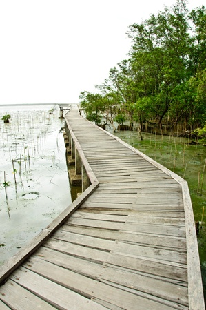 Wooden walkway in Mangrove forest at Petchabuti, Thailand Stock Photo