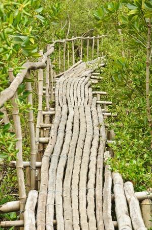 Bamboo walkway in Mangrove forest at Petchabuti, Thailand Stock Photo - 10413595