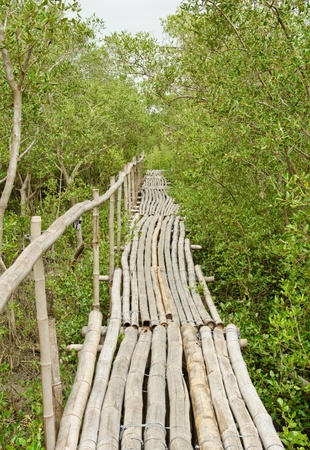 Bamboo walkway in Mangrove forest at Petchabuti, Thailand Stock Photo - 10413596
