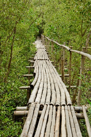 Bamboo walkway in Mangrove forest at Petchabuti, Thailand Stock Photo - 10413257
