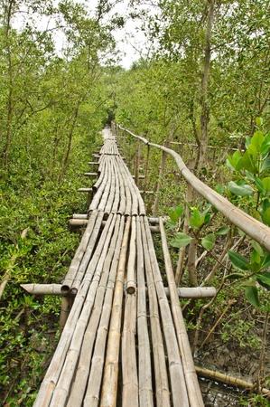Bamboo walkway in Mangrove forest at Petchabuti, Thailand Stock Photo - 10413600
