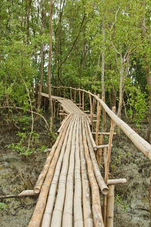 Bamboo walkway in Mangrove forest at Petchabuti, Thailand Stock Photo - 10413254