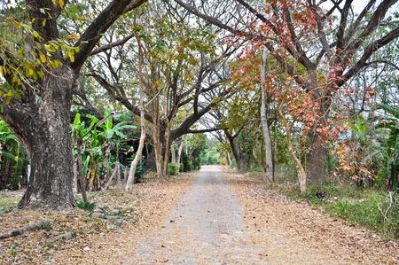 Route dans la for�t � Chiang Mai, Tha�lande Banque d'images