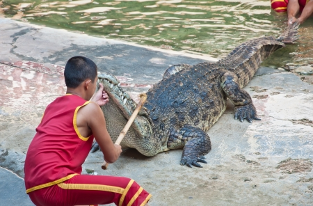 Crocodile show at Samutprakarn Crocodile farm in Thailand
