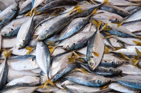 Fresh  fish in local market at Jampasak, Laos Stock Photo - 14216550