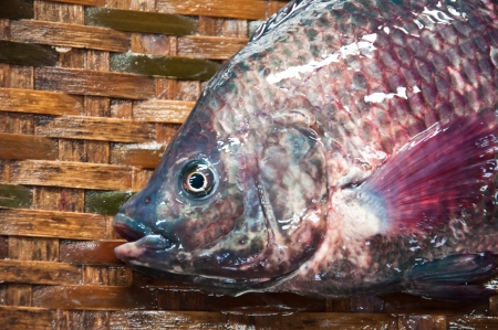Fresh  fish in local market at Jampasak, Laos Stock Photo - 14216567