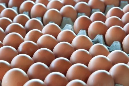 Egges in local markt of Jampasak, Laos Stock Photo - 14216553