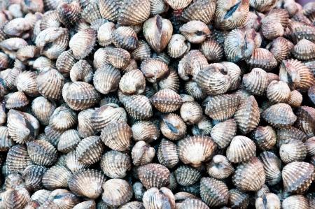 Fresh cockle in local market at Jampasak, Laos Stock Photo - 14216561