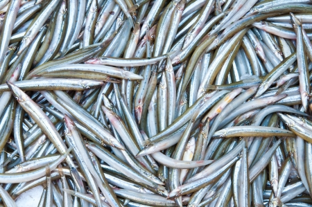 Fresh fish in local market at Jampasak, Laos Stock Photo - 14216554