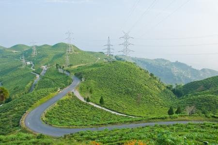 darjeeling: Road along tea plantation on the mountain in Darjeeling, India Stock Photo