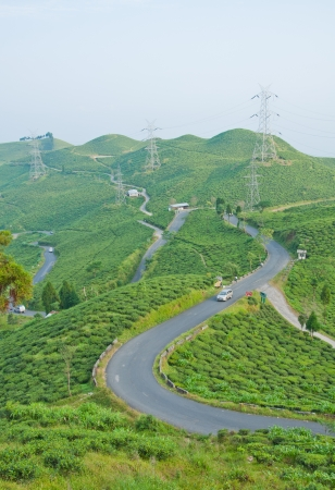 Road along tea plantation on the mountain in Darjeeling, India photo