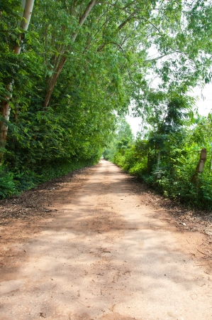 Local road in rural of Thailand Stock Photo - 16515381