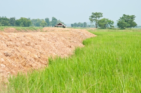 Riz d�pos� aupr�s de refuge en Tha�lande