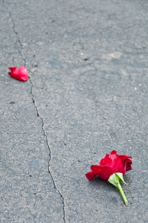 Red rose fade one foliage on cement ground floor