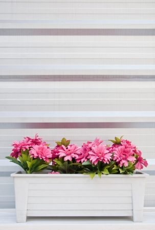 Pink chrysanthemum in the plastic pot with metal sheet as background photo