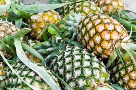 The group of pineapple in Thailand as background