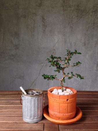 Un bonsa� dans le pot avec la cigarette sur la table en bois Banque d'images