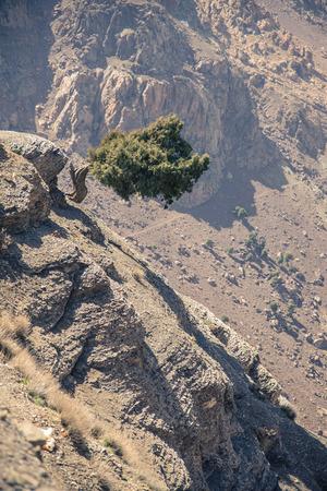 L'arbre autonome Atlas sur la route de Marrakech � Ouarzazate au Maroc