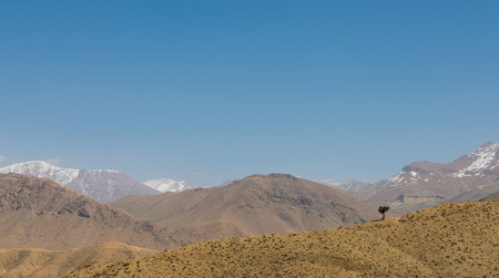 wold: The stand alone tree on Atlas on the way from Marrakesh to Quarzazate in Morocco