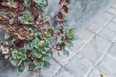 green plant with red branch with cement background