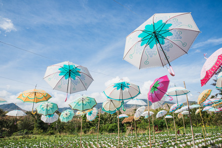 The colorful umbrella hang on the strawberry farm for decoration in Thailand