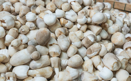 The rice straw mushroom for sell in the market as background
