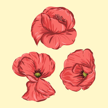 Red Poppy flower isolated vector illustration elements.