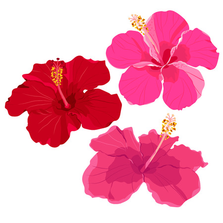 Set of tropical flowers elements. Collection of hibiscus flowers on a white background. Vector illustration bundle