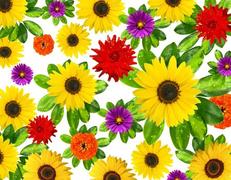 beautiful flowers background photo