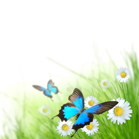 Beautiful spring background with lots of space for your logo or text  photo