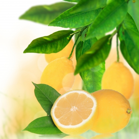 lemon tree: Fresh citruses background  Stock Photo