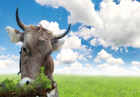 Portrait of cow with cloudy sky photo