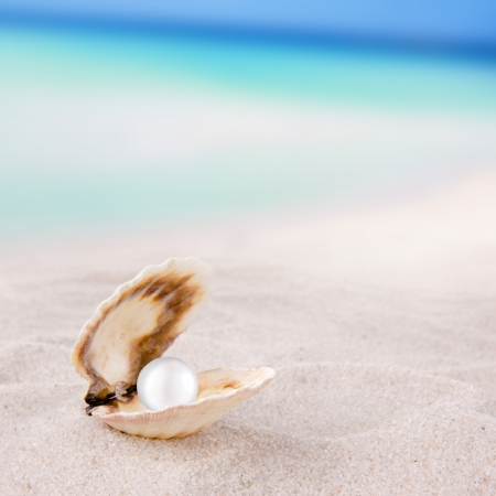 clam: Sea shell with pearl on the beach