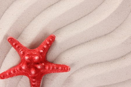 Red starfish on the sand photo