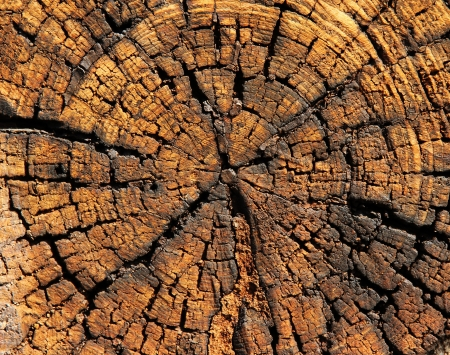 tree ring: Wooden background Stock Photo