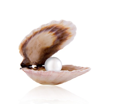 Sea shell with a pearl photo