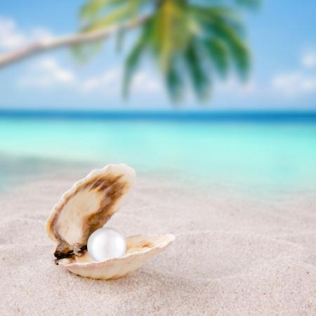 perlas: concha en la arena de la playa