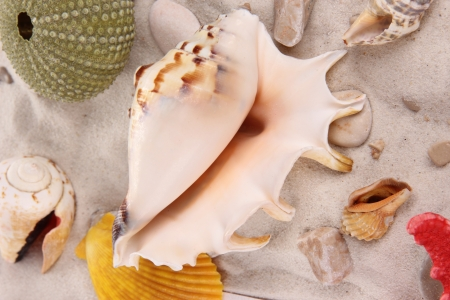 shells and starfish on sand beach  photo