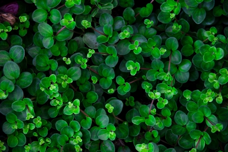 Lucky leaves background photo