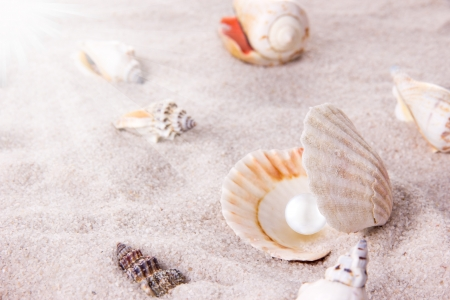 pearl shell: Sea shells on the beach Stock Photo