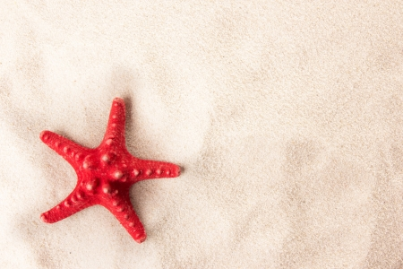 Red starfish on the beach photo