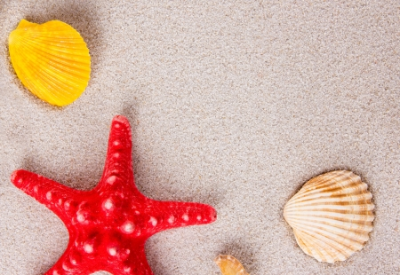Red starfish with sea shells on the beach photo