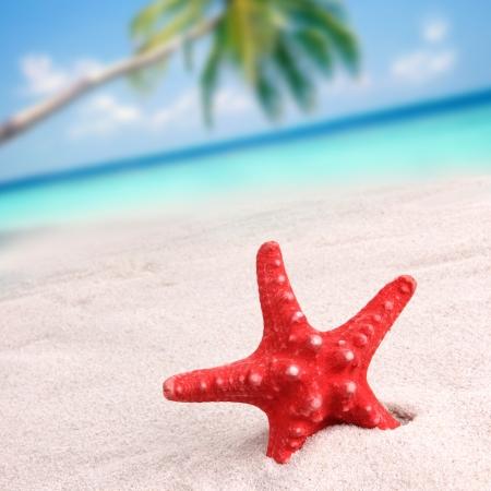 Red starfish on the beach photo