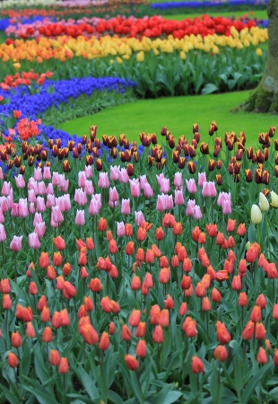 Colorful tulips field Stock Photo - 14730829